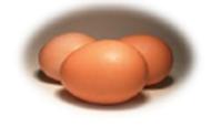 Ovos e ovoprodutos