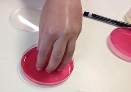 O Laboratório da ASAE vai à escola - Projeto Mãos Limpas