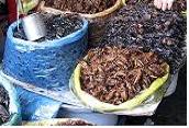 Perfil de risco relacionado com produção e consumo de insetos como alimento para alimentação humana