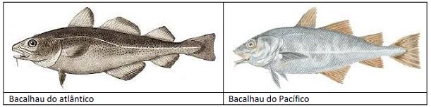 O Bacalhau e a Autenticidade Alimentar